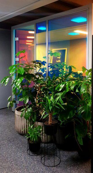 Farbenspiel dichroitischer Folie auf hohen Glasscheiben